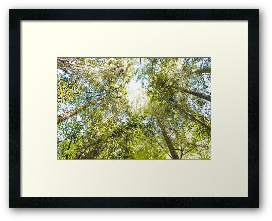 Forest Looking Up, Bright Sky by Amber Smith