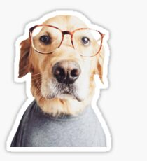 Golden in Glasses Sticker