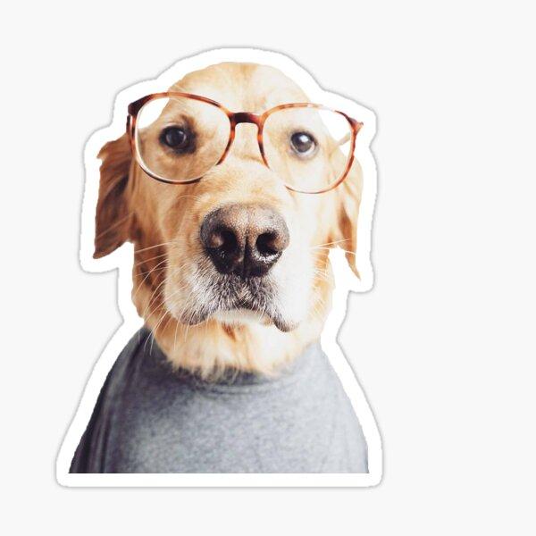 Golden in Glasses Sticker