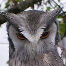 Owl Eyes by lezvee