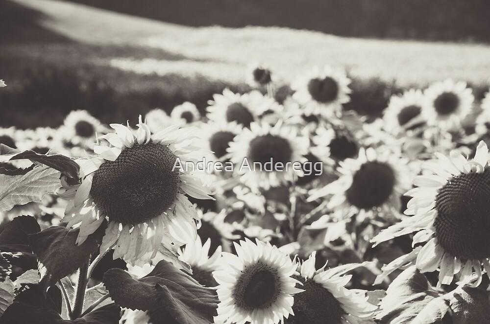 Sunflower Black And White 1 by andreaanderegg