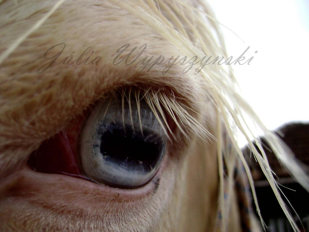eye by Júlia  Wypyszynski