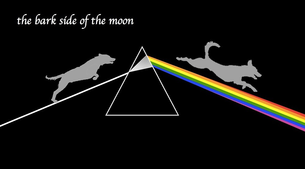 bark side of the moon by paigecharlotte1