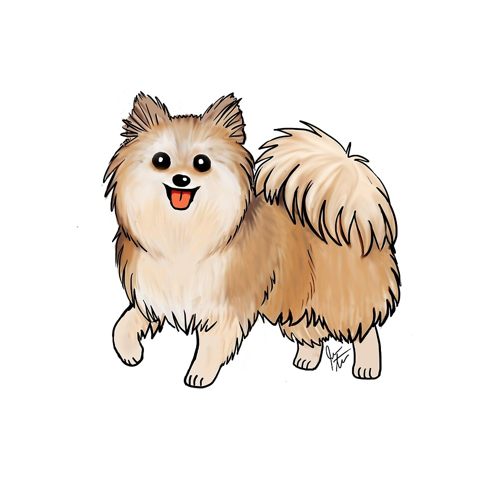 Pomeranian by Jennifer Stolzer