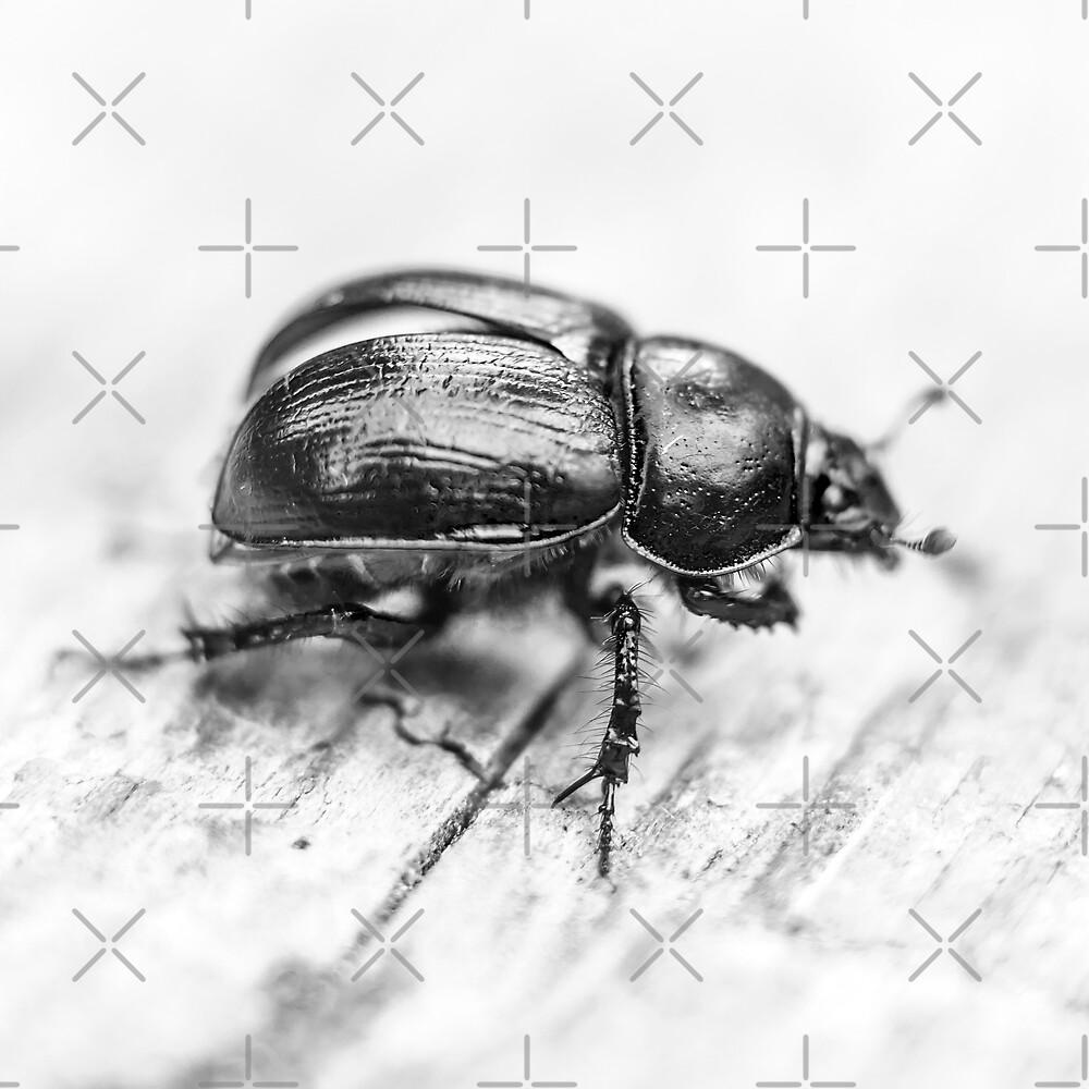 Black Beetle by GrandeDuc