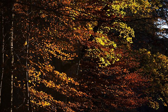 autumn colours, pitlochry by codaimages