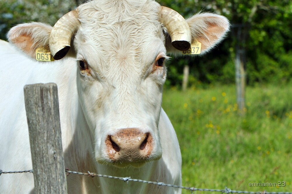 French Countryside Cow by emmanem23