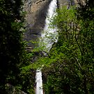Yosemite Falls Vista by Benjamin Padgett