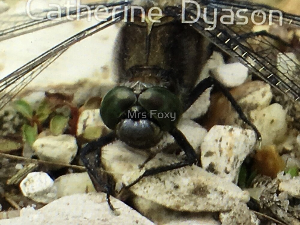 Dragonfly Bigger Version by Mrs Foxy