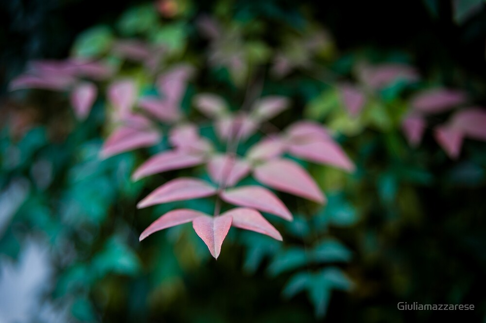 Leaves by Giuliamazzarese