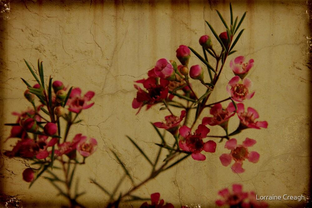 chamelaucium uncinatum by Lorraine Creagh