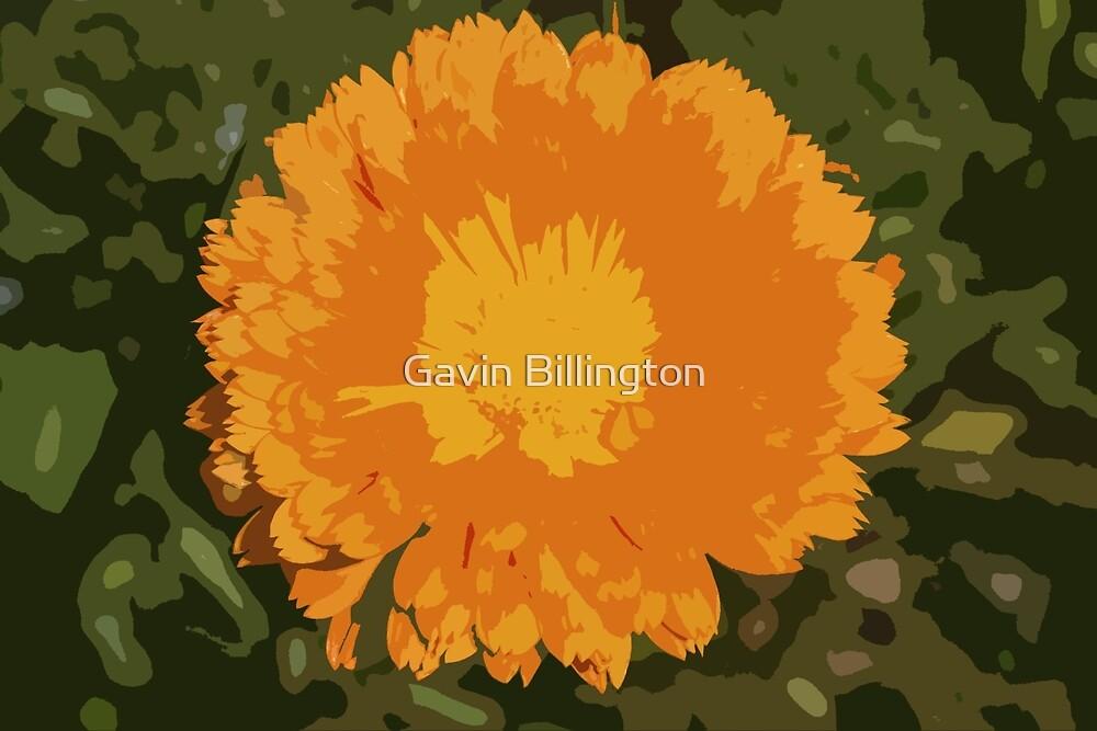 English Flower in Orange by Gavin Billington