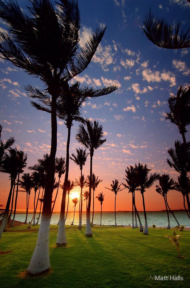 Dancing Dampier Palms by Matt Halls