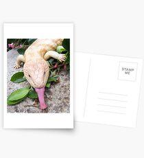 Albinio Blotched Bluetongue Postcards