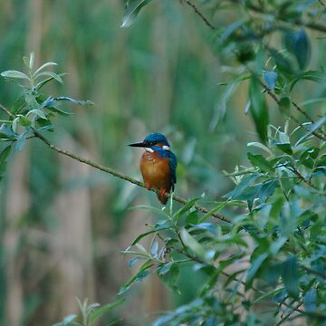 KingFisher by Jdn1000