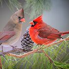 Cardinals in Pine by Bonnie T.  Barry