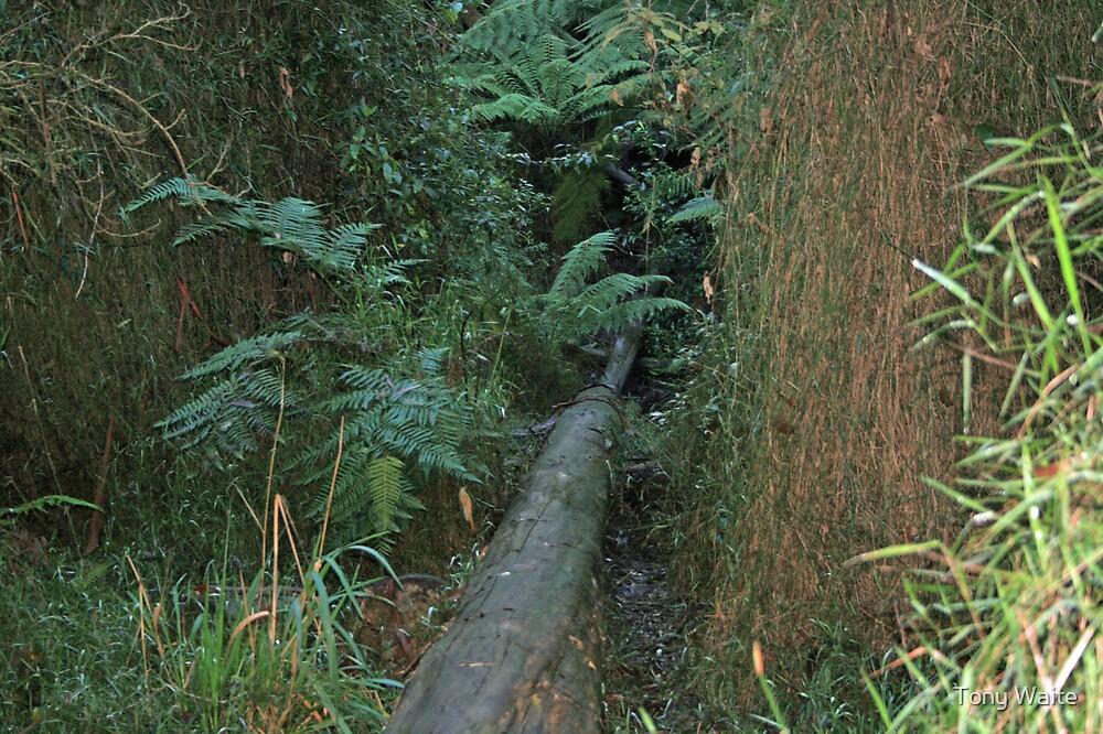 Fallen Tree by Tony Waite
