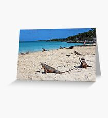 Iguanas at the Beach Bahamas Greeting Card