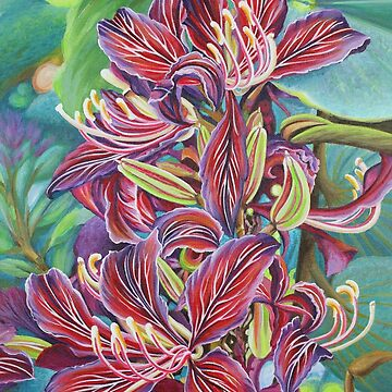Full Blossom Orchid Tree by janegirardot