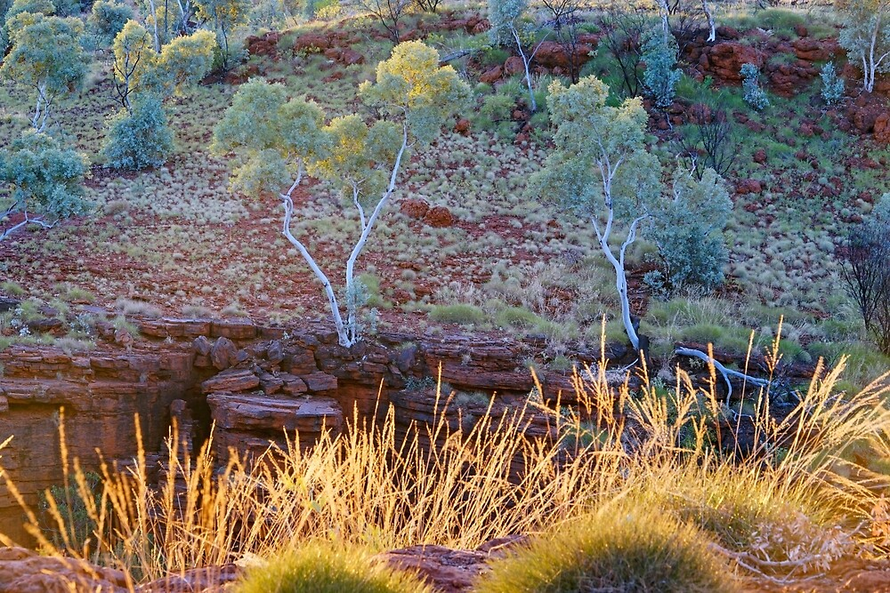 White Gums by Harry Oldmeadow
