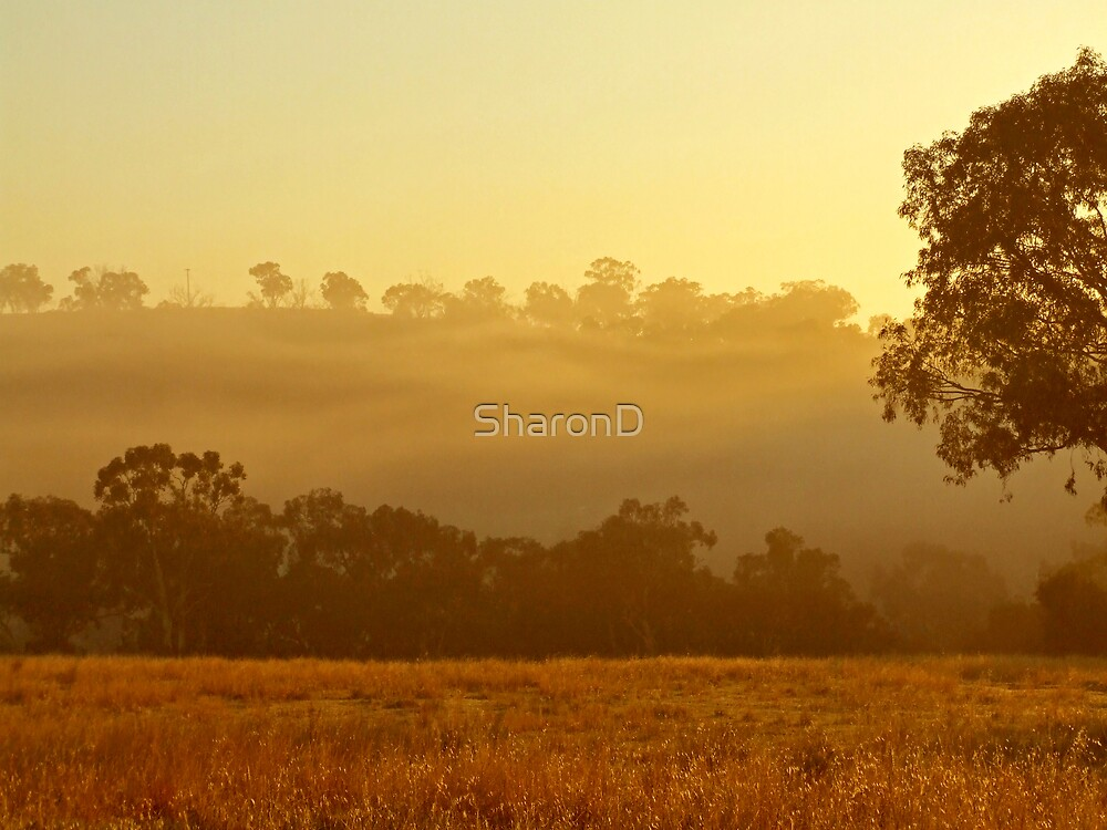 Golden Fog by SharonD
