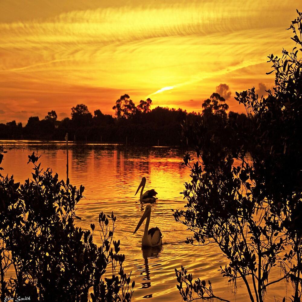 Peaceful Pelicans by engride