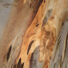 The Tree Bark Collection # 22 - The Magic Tree by Philip Johnson
