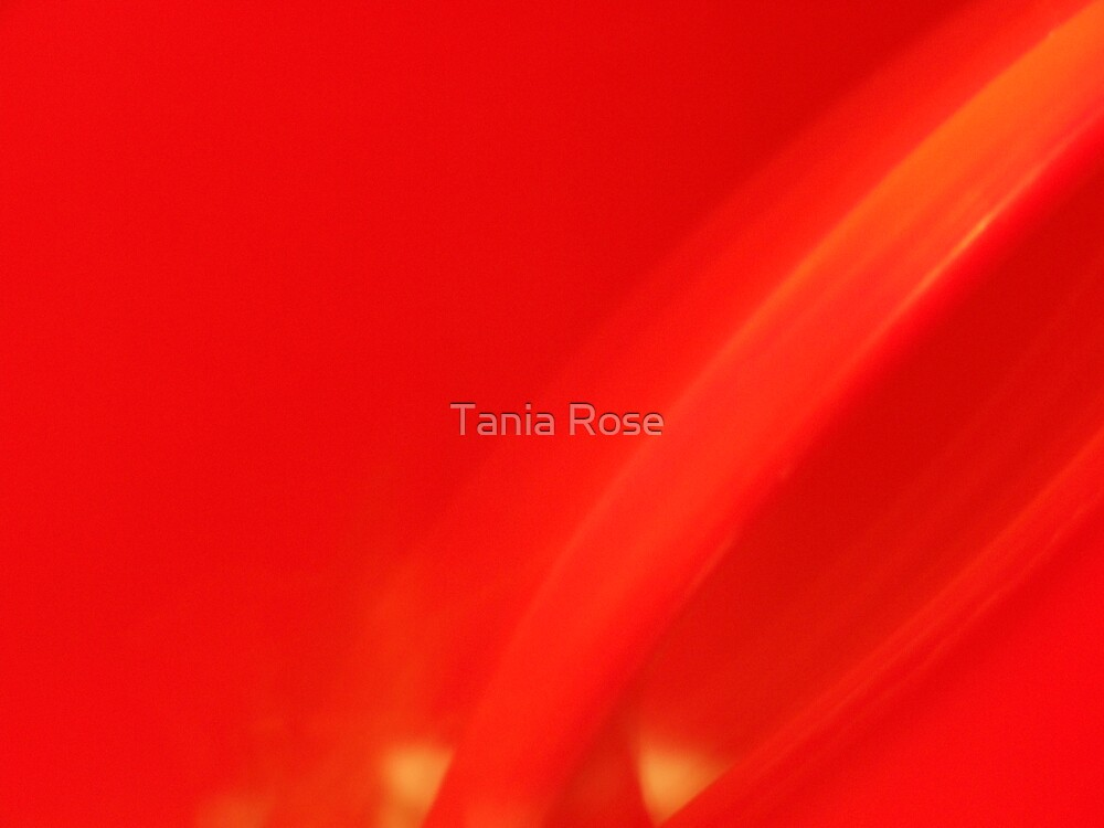 simply red by Tania Rose