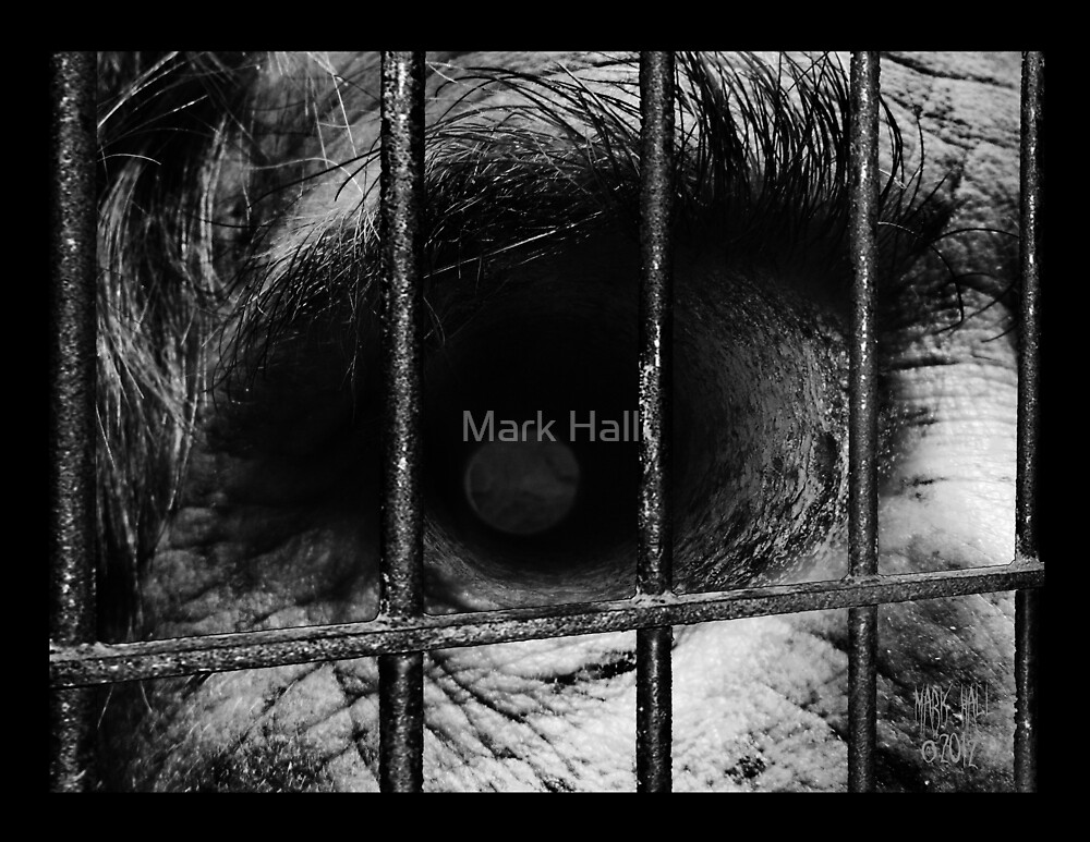 TIME by Mark Hall