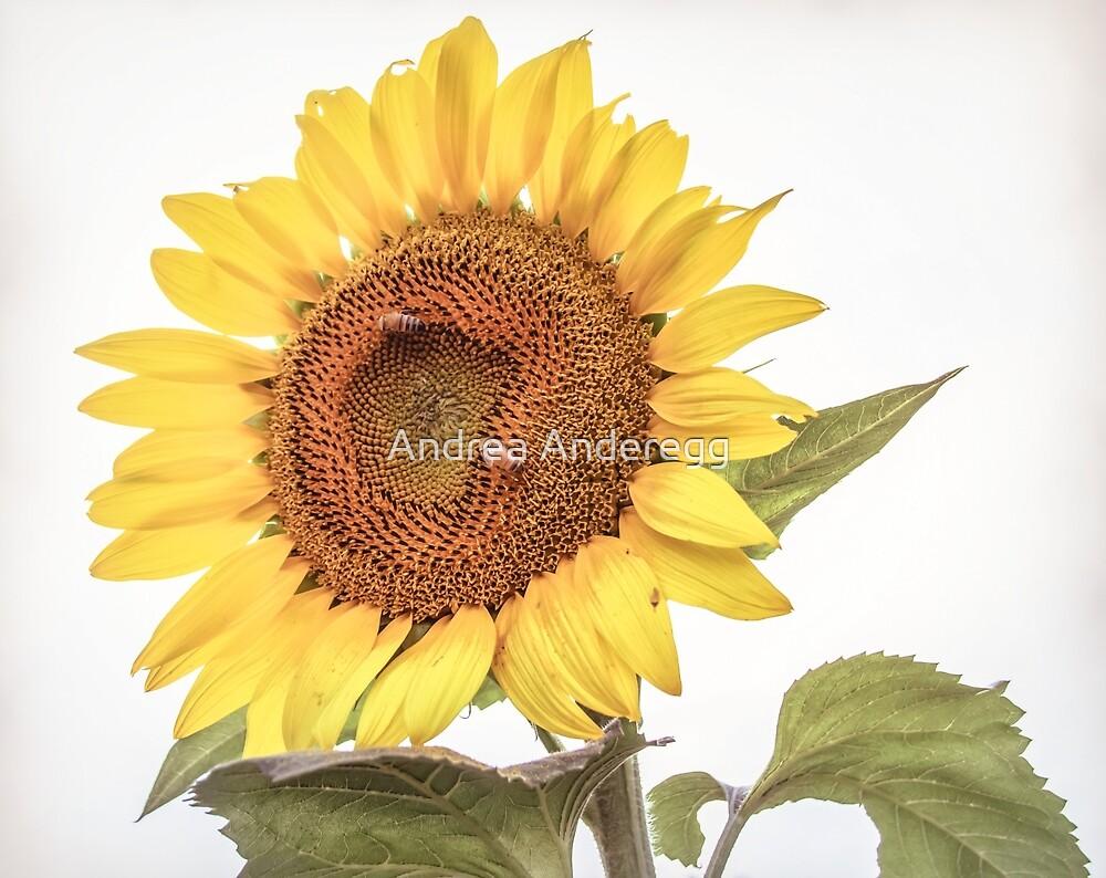Sunflowers 10 by andreaanderegg