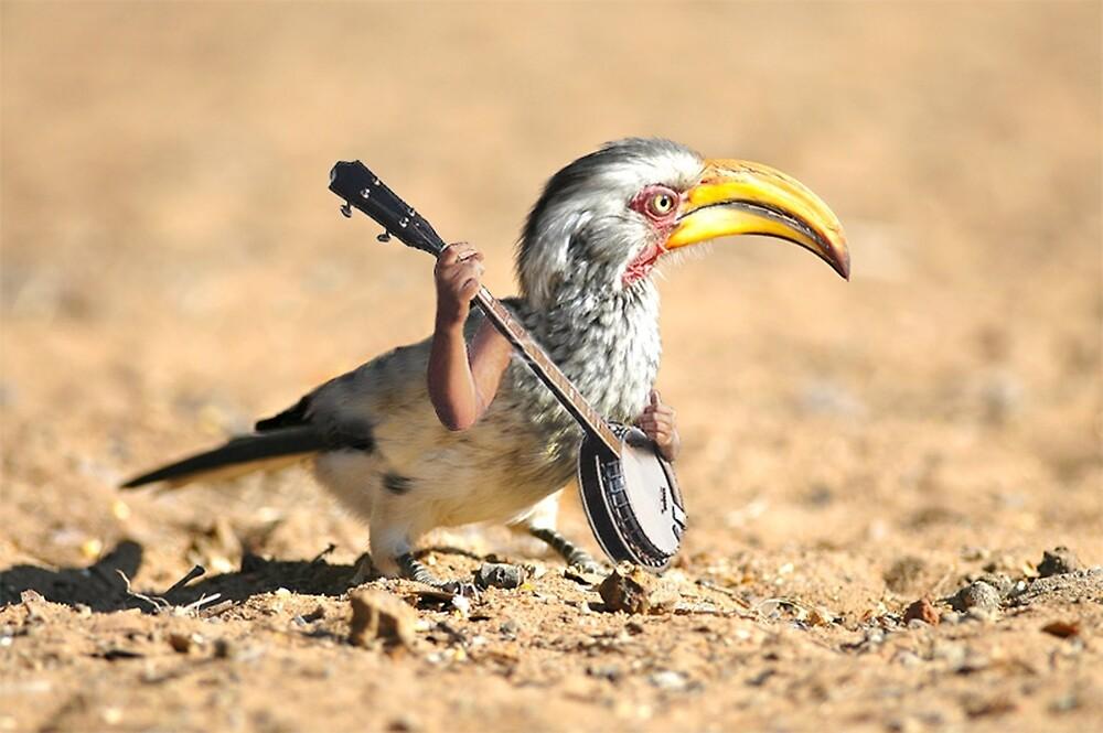 Grumpy Banjo Bird by Felfriast