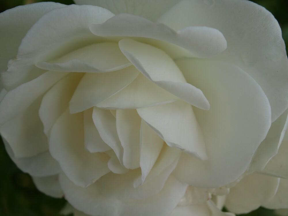 rose by makpics