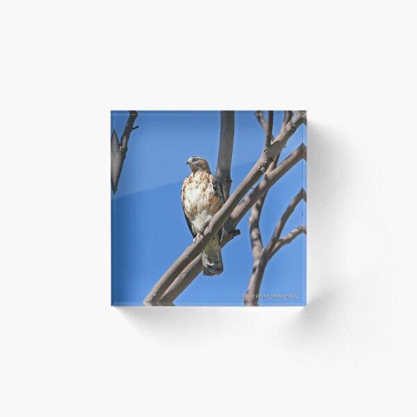 Little Eagle (282) Acrylic Block