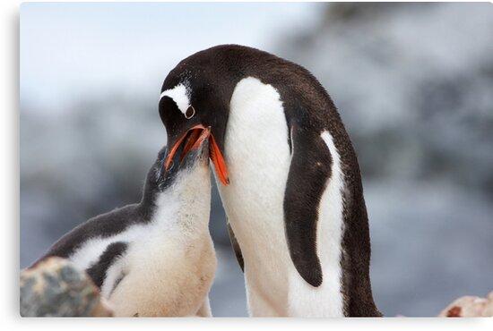 "Gentoo Penguin and Chick ~ ""Meals Home Delivered"" by Robert Elliott"