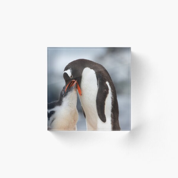 """Gentoo Penguin and Chick ~ """"Meals Home Delivered"""" Acrylic Block"""