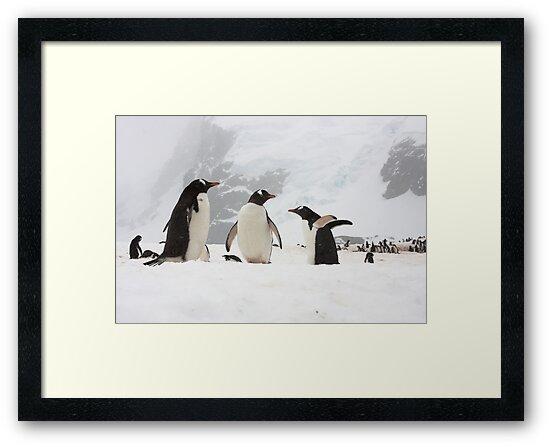 "Gentoo Penguins ~ ""Our World"" by Robert Elliott"