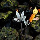 Plants in the marina  by Daniel  Oyvetsky