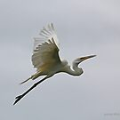 Eastern Great Egret (4561) by Emmy Silvius