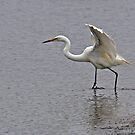 Eastern Great Egret (4618) by Emmy Silvius