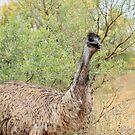 Emu (308) by Emmy Silvius