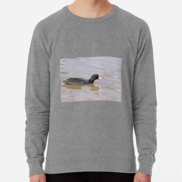 Eurasian Coot (709) Lightweight Sweatshirt