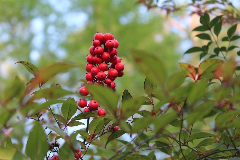 Red Berries by Grace Jane
