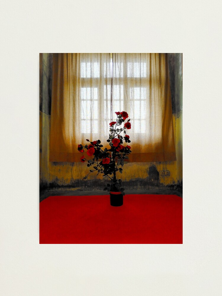 Alternate view of the Rose Photographic Print