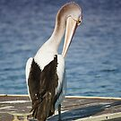 Pelican beauty 9000 by kevin chippindall