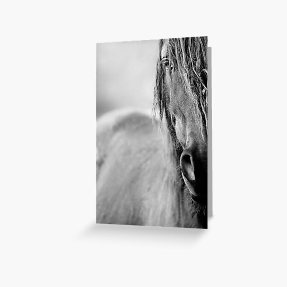 Pferd Grußkarte