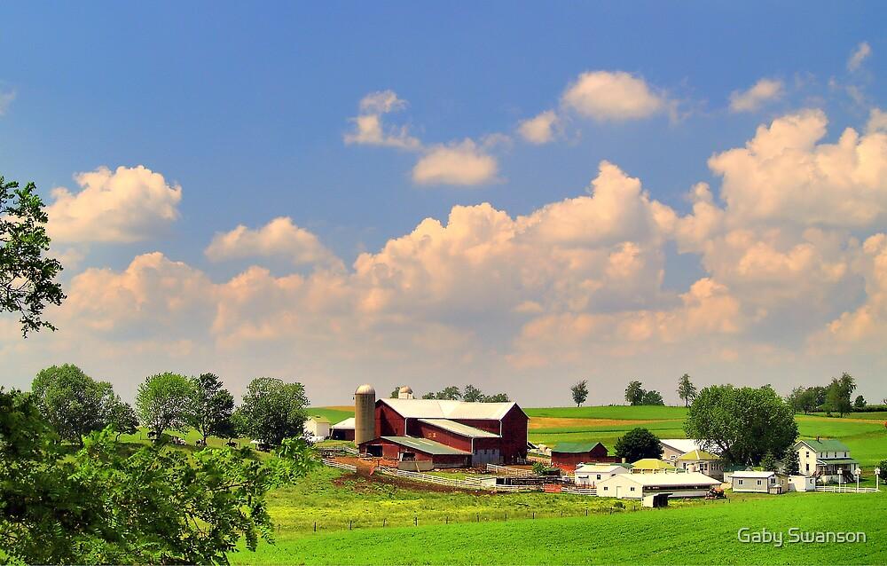 Amish Farm by Gabriele Swanson