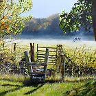 Misty Morning by Paula Oakley