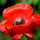 Bee & Poppy by AnnDixon
