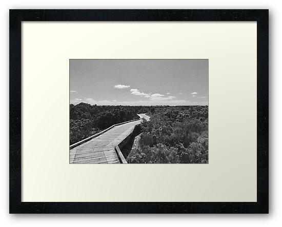 Rhyll Mangrove Boardwalk by EimearMac