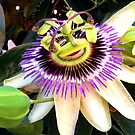 The Smiling Passion Flower by AnnDixon
